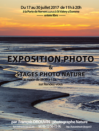 EXPOSITIONS-SPECTACLES